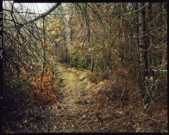 Marcello-Galvani-Verghereto-Forest-16-01-2018-525x420