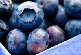 Thumbnail Blueberry