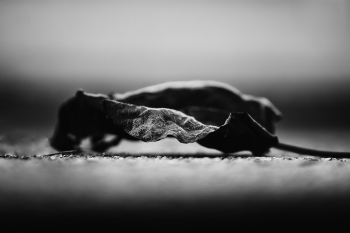 Feuille morte