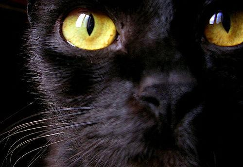 gatto nero porta male