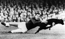 Gordon-Banks-portiere cane