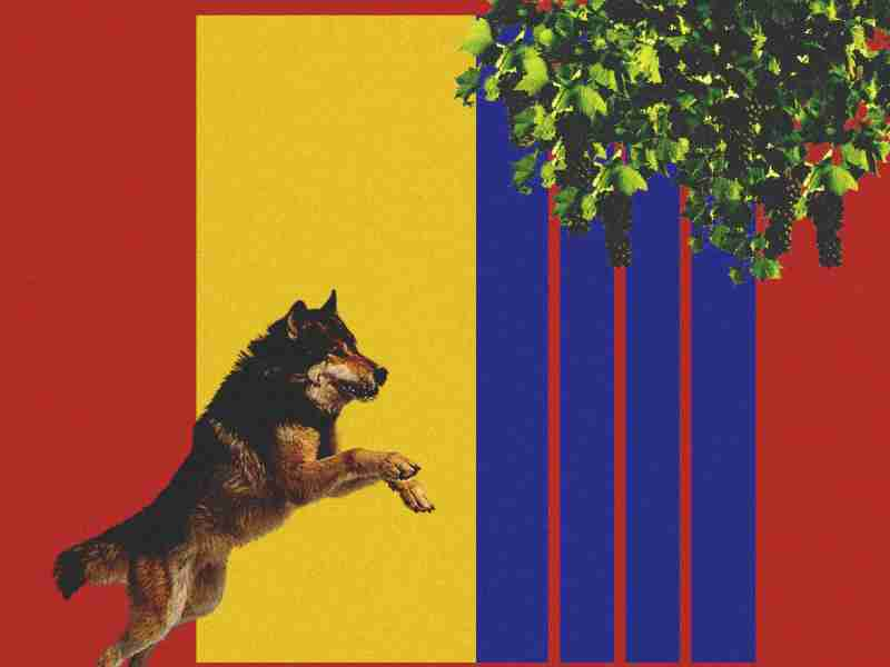 FC Barcelona, The Fox in a Wolf's Den - An Alternative Match Report