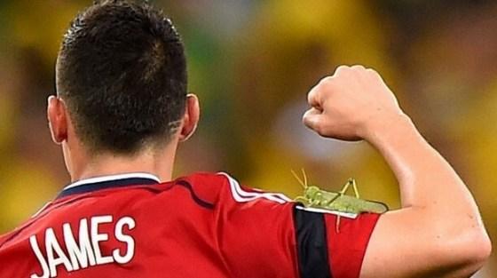 Bug on shoulder of Rodriguez
