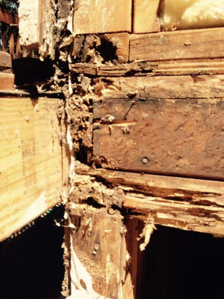 Drywood Termite Damage Foothill Sierra Pest Control