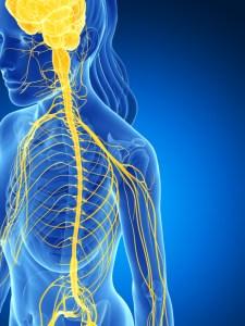 female nervous system