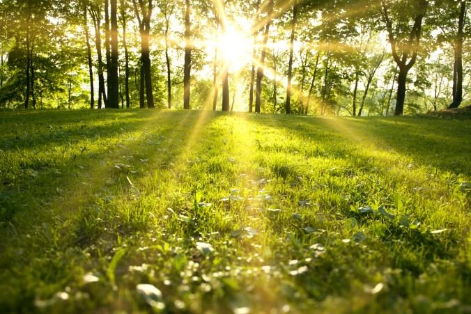 Spring green sunlight