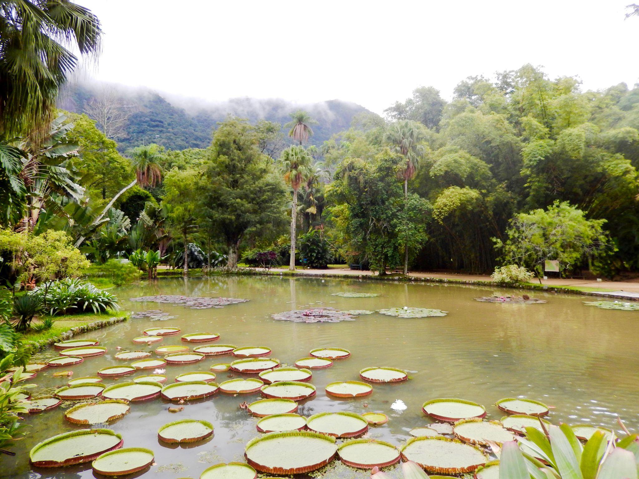 Lake in Rio de Janeiro botanical garden