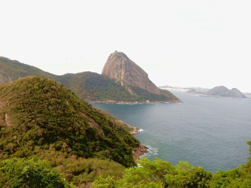 5 places to see monkeys in Rio de Janeiro | Footloose Lemon Juice