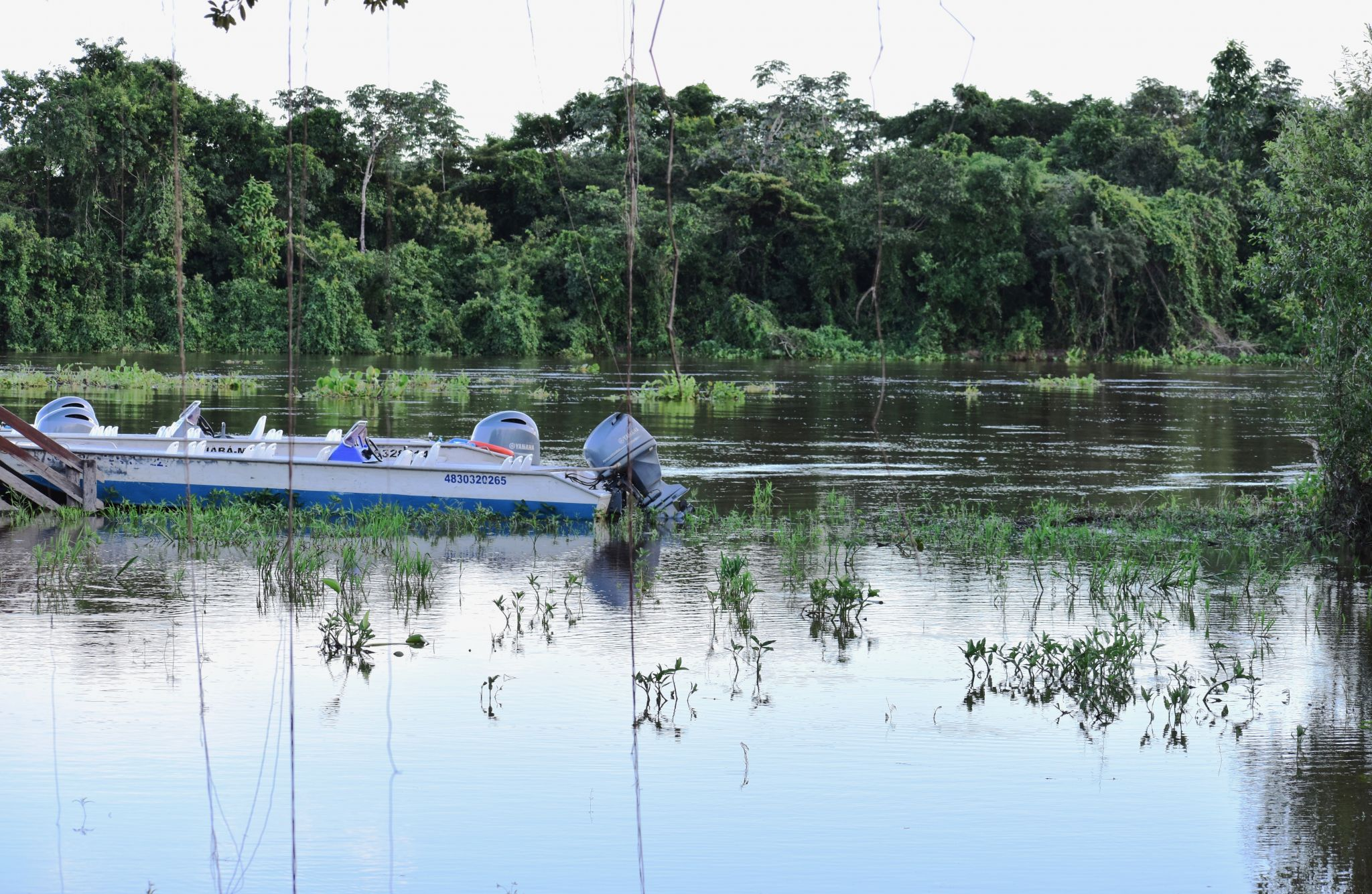 Boat on Pantanal River