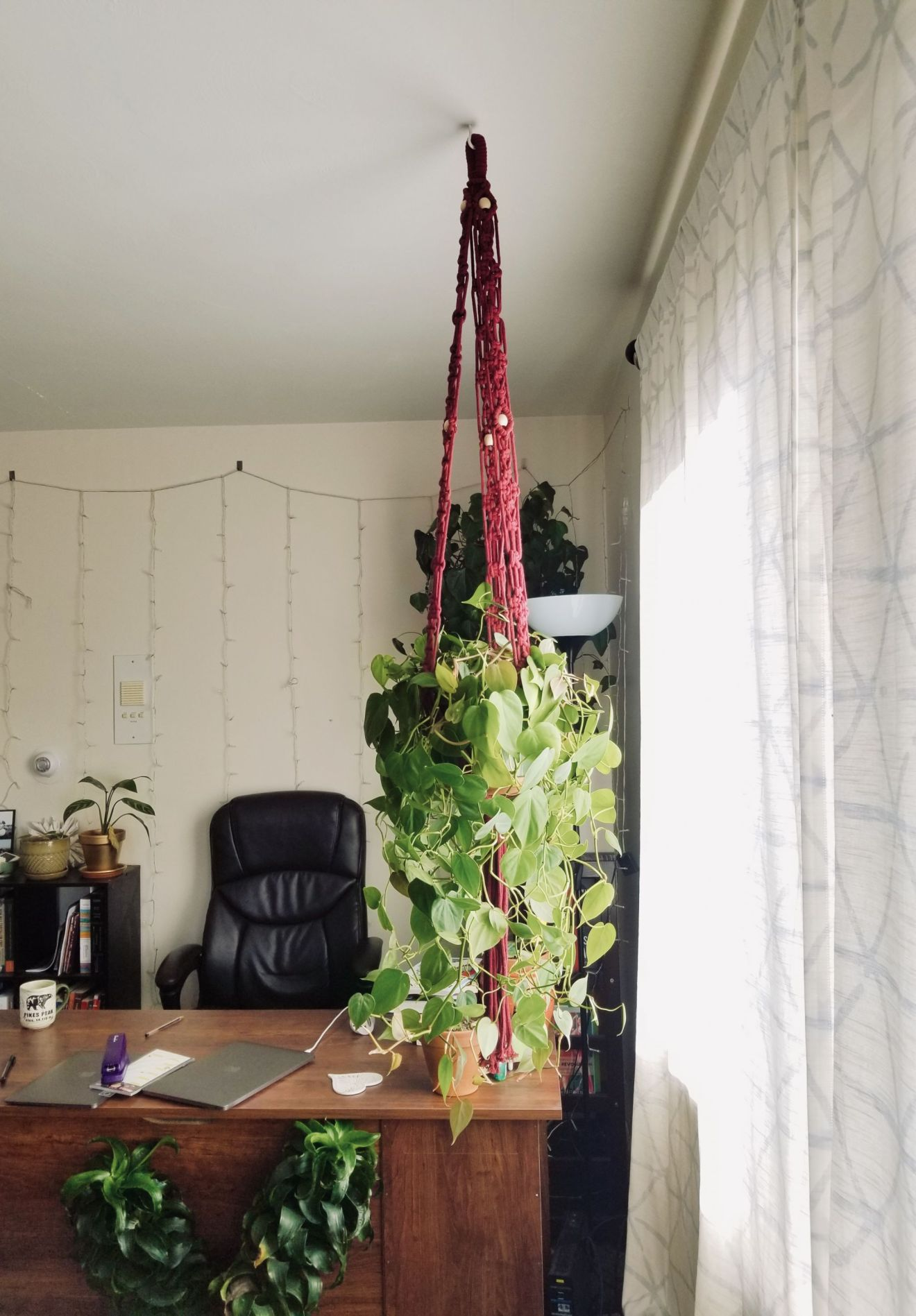Macrame plant hanger with heart shaped philodendron