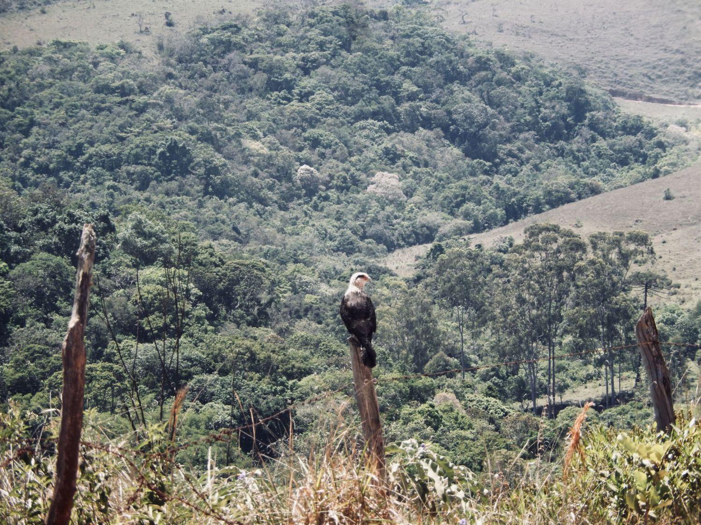 Cacara-in-Minas-Gerais