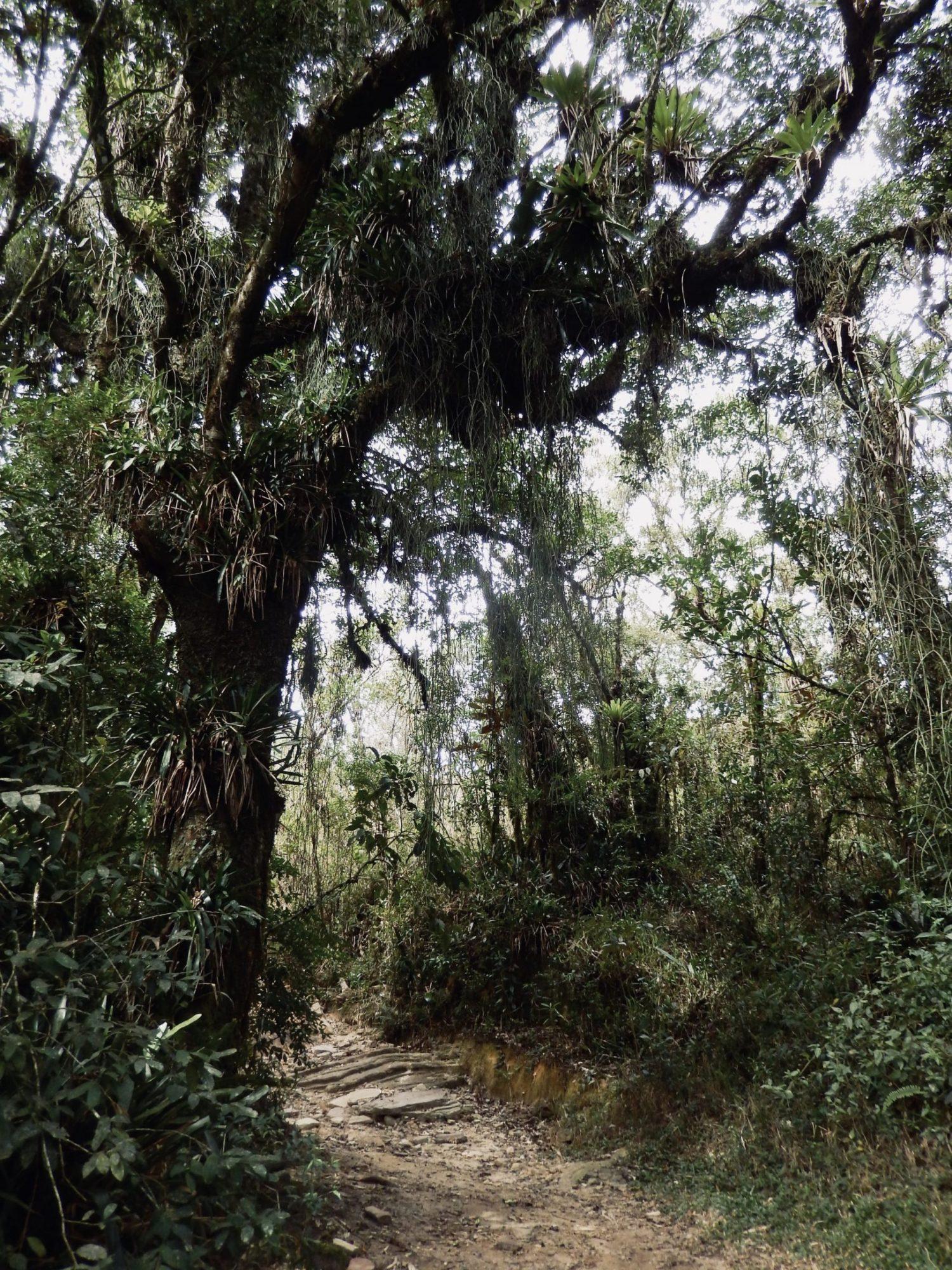 Ibitipoca forest