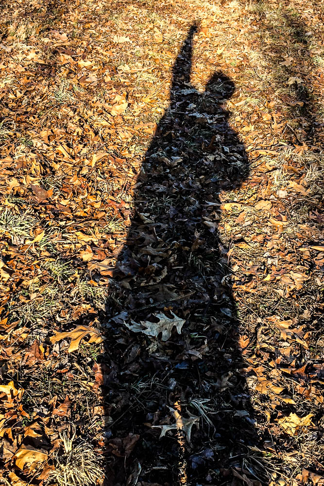 me in the leaves
