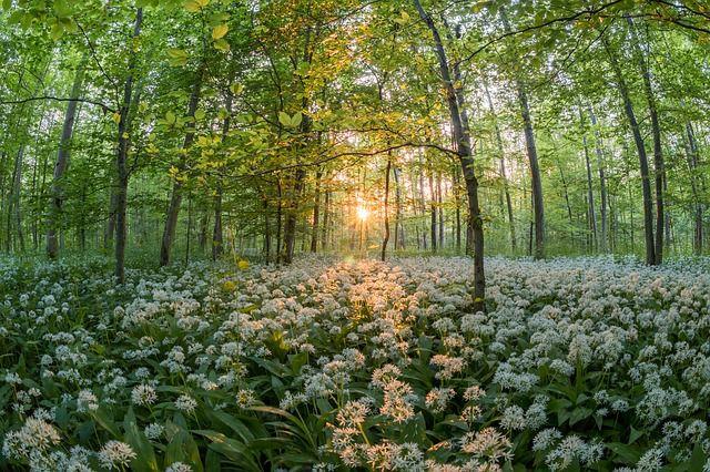 Wild Garlic, Living Life & New Beginnings