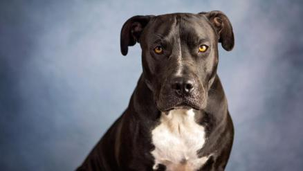 Dog Breeds Banned By Home Insurance Companies – Forbes Advisor