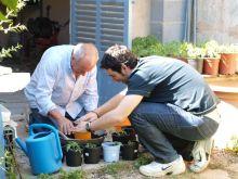 Transplantando tomates 1