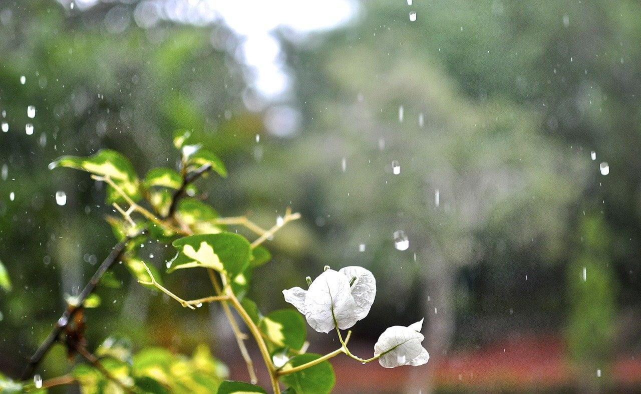 sons de la pluie