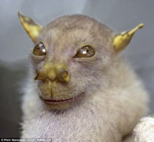 TUBE-NOSE BAT FOUND IN PAPUA NEW GUINEA LOOKS LIKE YODA: At Least That's What A Bunch of Geeky Scientists Believe