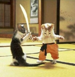 EPIC CAT FIGHT CAUGHT ON VIDEO (If Only Hollywood Could Create Something This Intense)