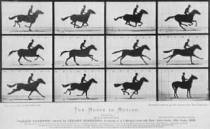 WATCH THIS!  The Genius Puppetry Behind WAR HORSE