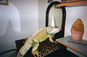 IGUANAS Eating Ice Cream On Their Birthday…It's Friday, What Do You Want?