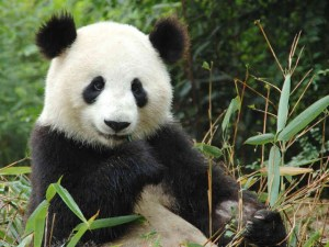 LOSE YOURSELF In Pure Panda Nirvana