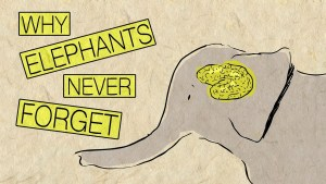 SCIENCE GEEK: Why Elephants Never Forget