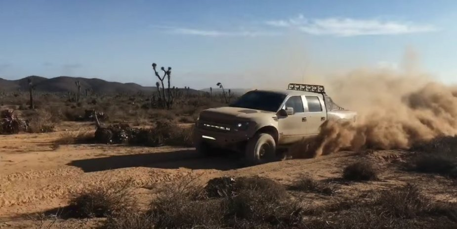 Raptor in Baja