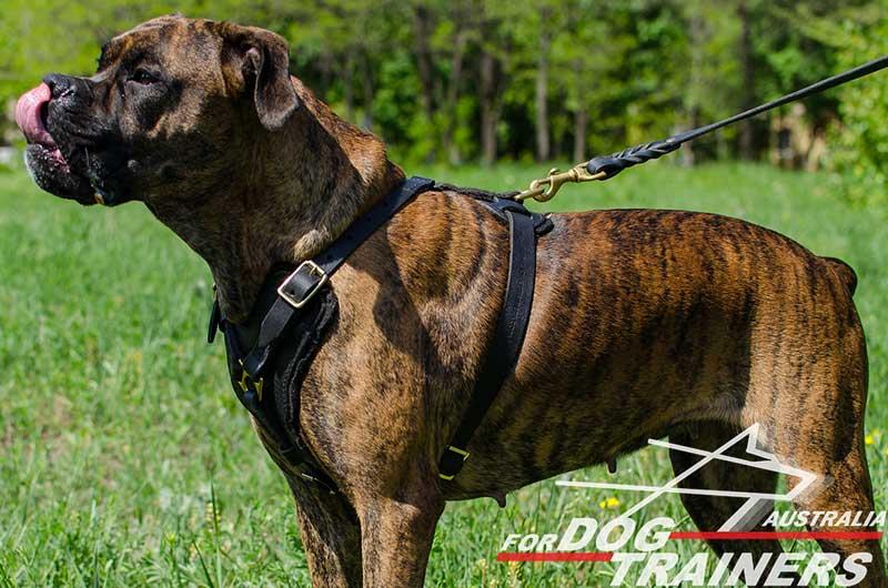 Buy Adjustable Padded Leather Dog Harness