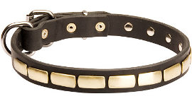 Gorgeous Leather Dog Collar - Fashion Exclusive Design - Special25plates