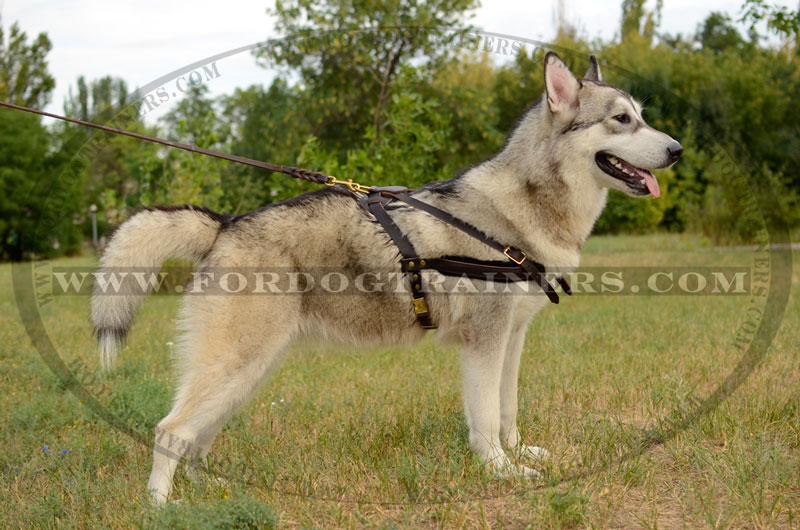 Choose Comfortable Dog Harness Dog Front Padded Harness