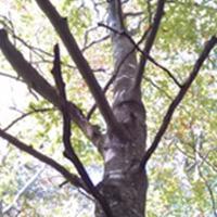 Tree Risk Surveys