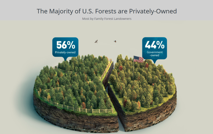 Forest America