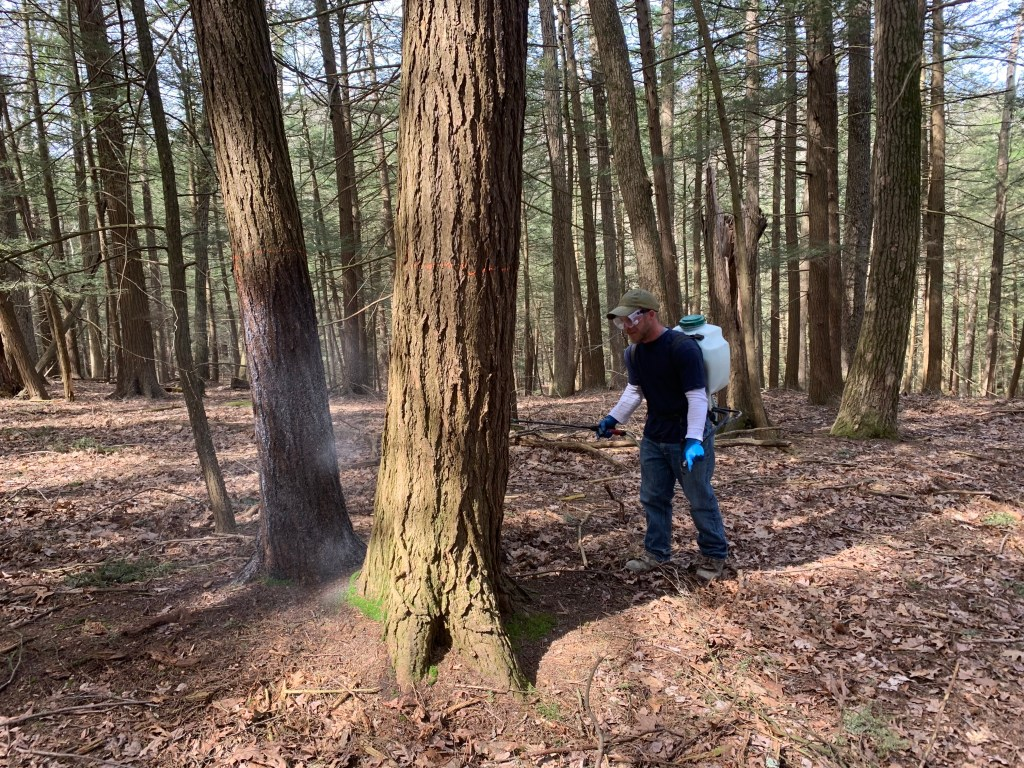 FORECON, Inc. has completed FORECON treats 3 State Parks to suppress the Hemlock Woolly Adelgid