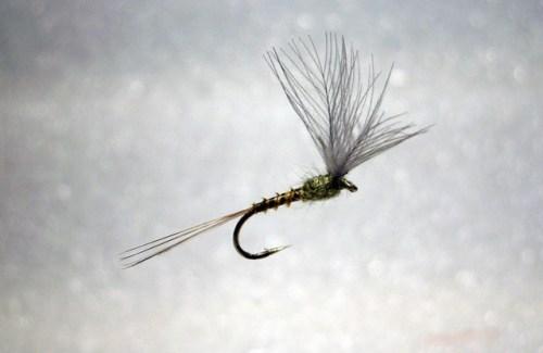 Forelle Äsche Fliegenbinden Blue Winged Olive BWO 6