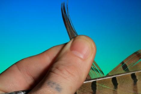BOC PTN Pheasant Tail 3