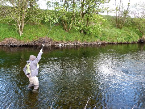 River Annan Fish On