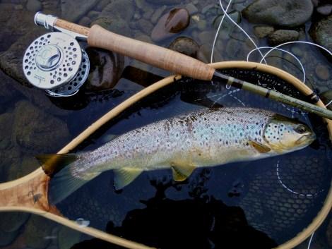 River Annan Trout1