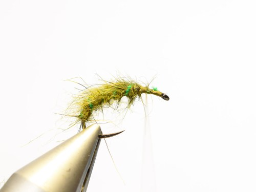 Rhyacophila_Caddis_Sedge_Pupa6