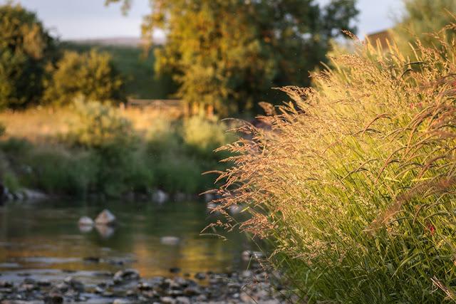 Fliegenfischen_Sonnenuntergang_am_Wasser_Abendstimmung