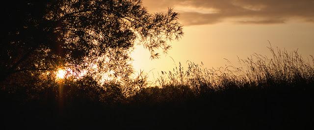 Fliegenfischen__Sonnenuntergang_am_Wasser