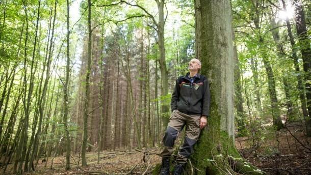 Hümmel kontra Lasy Państwowe