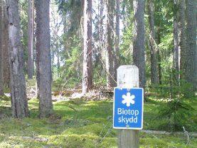 Leśne prawo własności w lesie.