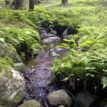 Strumyki i rowy - niedostrzegana woda w lesie.