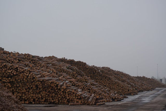 timber harvests