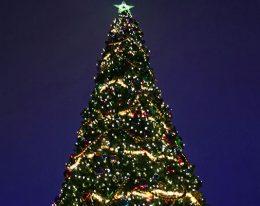 Prislista på julgranar måste finnas