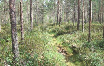 Den moderate skogvaktaren