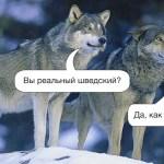 Polowania na wilki w Skandznawii.