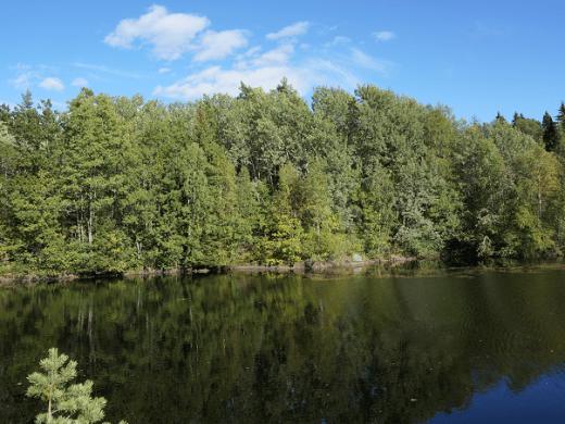 leśnictwa