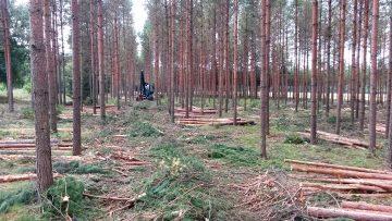 Plantacje drzew nie są lasem.